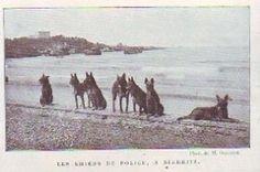 1905  --  LES CHIENS DE POLICE A BIARRITZ   Z282
