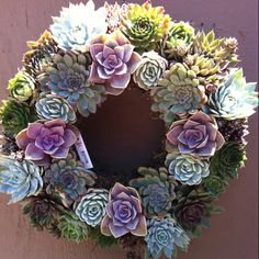 An awesome succulent wreath from Rodger's Gardens.
