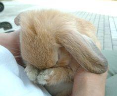 #rabbit #cute