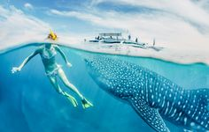 10 Reasons Why Belize Needs To Be On Your Summer Travel Bucket List Underwater Hotel, Underwater Restaurant, Swimming With Whale Sharks, Shark Diving, Cancun Tours, Cozumel, Belize Travel, Fishing Guide, Deep Sea Fishing