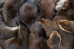 It's one big otter cuddle puddle! - August 7, 2014