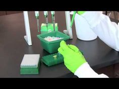 ▶ Restriction Digestion of DNA - YouTube