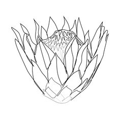"""""""Botanical Collection"""" - Protea Flower Art Print by Annette Elisse Design - X-Sm. """"Botanical Collection"""" - Protea Flower Art Print by Annette Elisse Design - X-Small Protea Art, Protea Flower, Flower Canvas, Flower Art, Lino Art, Botanical Line Drawing, Oil Painting Flowers, Watercolor Flowers, Geometric Drawing"""