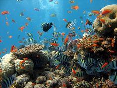 mořské řasy - Hledat Googlem