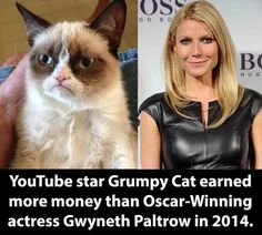 That Cat Is More Successful Than Me