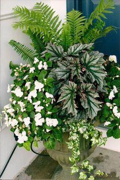 Ferns, impatiens, begonia and ivy, wonderful shade urn!!