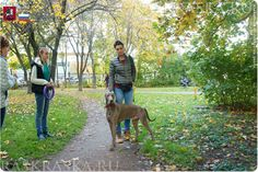 Academy Of Sciences, Moscow Russia, Weimaraner, Dog Photos, Projects For Kids, Daughter, Photo And Video, Grey, Dogs