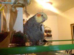 Dewey striking a pose