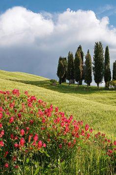 Cypress Hill Flowers, Tuscany, (by Paul Bruins) Landscape Photos, Landscape Paintings, Landscape Photography, Nature Photography, Beautiful World, Beautiful Places, Beautiful Pictures, Nature Pictures, Amazing Nature