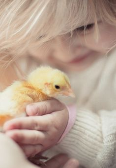 .. being so careful not to squash the baby chick ..