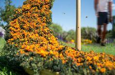 ru | urban beehive (detail) | design: marc-andré roberge