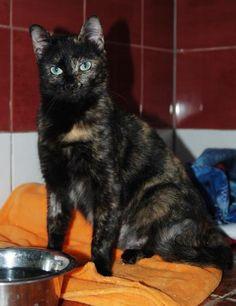 TERRA - Gato adoptado - AsoKa el Grande