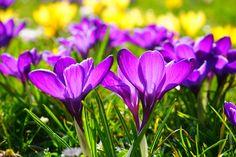 Hola amigos y amigas de Parafarmacia Filipinas. Os queremos invitar a leer nuestro último artículo acerca de la #alergiaalpolen. Ya estamos en #primavera y la alergia empieza a aparecer. http://parafarmaciafilipinas.com/blog/la-primavera-y-la-alergia-al-polen