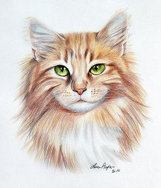 Calico Cat Art Print by Lena Auxier - # Check more at welt. Calico Cat Art Print by L Pencil Art Drawings, Animal Drawings, Art Sketches, Horse Drawings, Gato Calico, Calico Cats, Desenho Scooby Doo, Cat Art Print, Color Pencil Art