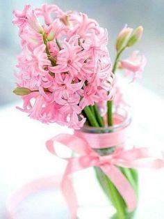 think pink pretty pink hyacinth gorgeous