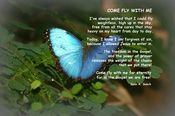 """""""Come Fly With Me"""" Christian messsage of hope.  Photo is Common Morpho Butterfly taken at Meijer Gardens, Grand Rapids, MI"""