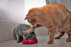 Its like eat it!!! What a mean cat lmao!
