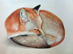 Award winning, luxury wildlife artwork by Carla Grace Art. Australia based artist Carla Grace paints breathtaking realistic wildlife paintings of animals from all over the globe. Paintings For Sale, Original Paintings, Original Art, Grace Art, Fox Drawing, The Other Art Fair, Wildlife Paintings, Fox Art, Painting Techniques