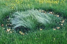 """Ever wonder what a """"fairy ring"""" really is? ..."""