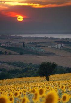 Tuscany - Italy (von kettyschott)