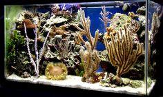 yardboy - 2008 Featured Nano Reefs - Featured Aquariums - Monthly Featured Nano Reef Aquarium Profiles - Nano-Reef.com Forums #aquarium