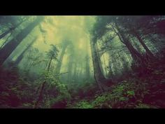 Shop Misty Forest Poster created by FotoFactory. Personalize it with photos & text or purchase as is! Misty Forest, Deep Forest, Foggy Forest, Magic Forest, 3d Fantasy, Fantasy Setting, Fantasy Trees, Fantasy Books, Forest Wallpaper