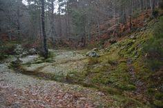 Arroyo entre nieve en la Senda del Bosque