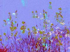 'Traum in flieder' von lisa-glueck bei artflakes.com als Poster oder Kunstdruck $18.03