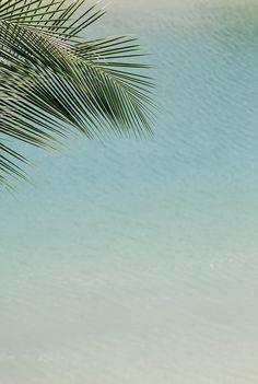 <> palms, ocean, summer