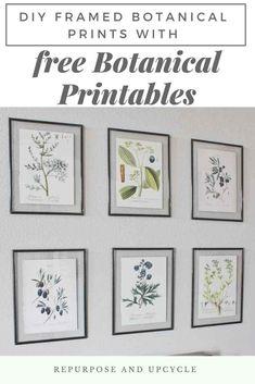 DIY Framed Botanical Prints with Free Botanical Printables #freeprintables #botanicalprints #freebotanicalprintables