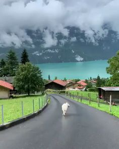 Travel Discover Puppy strolling at Lake Brienz present Video On Vacation Places Dream Vacations Vacation Spots Places Around The World Oh The Places You& Go Around The Worlds Beautiful Places To Travel Wonderful Places Magic Places Vacation Places, Dream Vacations, Vacation Spots, Beautiful Places To Travel, Wonderful Places, Magic Places, Nature Gif, Nature Videos, Places Around The World