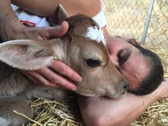 Woman Makes A Promise To Calves She Rescued From A Medical Lab