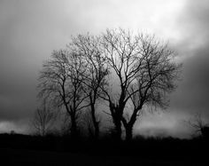 Tree Photography 1 landscape photography forest by JamesClancy, Vintage Nature Photography, Storm Photography, Photography Series, Tree Photography, Landscape Photography, Outdoor Photography, Black And White Tree, Black And White Landscape, White Trees