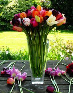 Jane Brockett's tulips