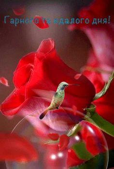 Beautiful Rose Flowers, Flowers Gif, Beautiful Flowers Wallpapers, Beautiful Nature Wallpaper, Beautiful Gif, Beautiful Birds, Roses Gif, Images Of Flowers, Good Night Beautiful