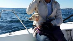 Estaban navegando cuando vieron algo que no podían comprender. ¡INCREÍBLE que estuviera VIVO!