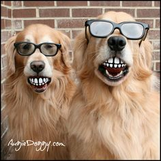 Smile! And give your fur-baby a toothy grin too with these grinning dog balls! Shop online.
