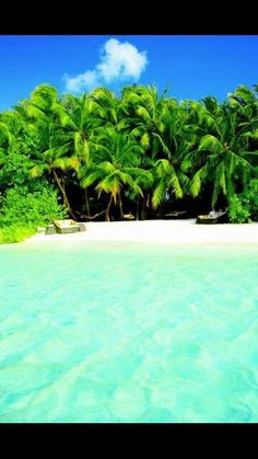 Boroas, Maldives