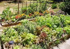 Výsledok vyhľadávania obrázkov pre dopyt permaculture garden