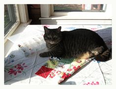 Submit a Caption, Win a Bundle - Quilting Daily
