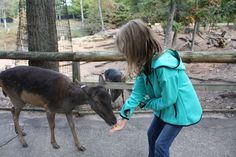 Wisconsin Dells Deer Park: Fall Family Fun in Wisconsin Dells Family Weekend, Weekend Fun, Fall Family, Traveling With Baby, Travel With Kids, Family Travel, Unique Vacations, Wisconsin Dells, Deer Park