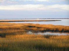 Assateague Island National Seashore: salt marsh in Chincoteague National Wildlife Refuge