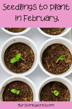 This February Seed Starting Schedule is targeted for those of you that live in the colder northern zones. (Zones 3 to If you live in any of these Zones then February is the month to get serious about starting this year's seedlings! Diy Gardening, Gardening For Beginners, Container Gardening, Organic Gardening, Gardening Quotes, Indoor Vegetable Gardening, Small Vegetable Gardens, Veggie Gardens, Design Jardin