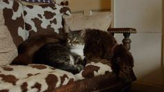 猫を飼っている人なら分かるだろう。ぐっすりと眠っているように見えるが、何気ない音でもパチっと目を覚ますことを。人間は眠りに落ちると聴覚の機能は低下するが、猫の場合は寝ていても聴覚は働いている。   猫の睡眠は、周囲の危険を感じとり異変が起きたらすぐに反応して回避できるように、ほとんどの時間が浅い睡眠になっているのだ 。そして、ここに、自らのもてる能力のすべてを目の見えない犬に捧げた野良猫がいる。この2匹ほど固い絆で結ばれた猫と犬はそういないだろう。