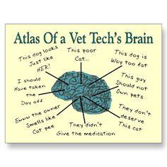 Atlas del cerebro de un veterinario