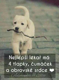 Pes ti dá do tváří ůsměv vždy když je nejhůř😢❤❤💘💘 Words Can Hurt, Cool Words, Dog Quotes Love, Best Quotes, I Love Dogs, Puppy Love, Cute Pupies, Just Smile, Jokes Quotes