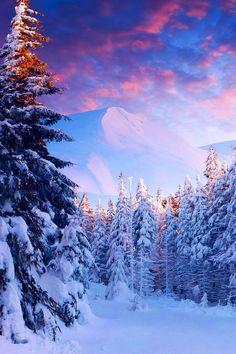 Beauty of Winter, Carpathian Mountains, Ukraine