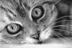 Kitten Pencil Drawing | 30 Beautiful Cat Drawings - Best Color Pencil Drawings and Paintings