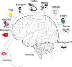 Neuropsychologischer Ratgeber