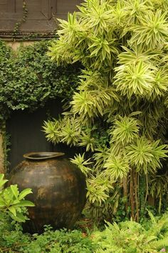 Garden tropical design small spaces 31 Best Ideas - Garden Care, Garden Design and Gardening Supplies Backyard Garden Landscape, Small Backyard Gardens, Diy Garden, Garden Landscape Design, Garden Spaces, Small Gardens, Shade Garden, Garden Pots, Garden Landscaping